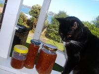 Feijoa Jam and Maddy